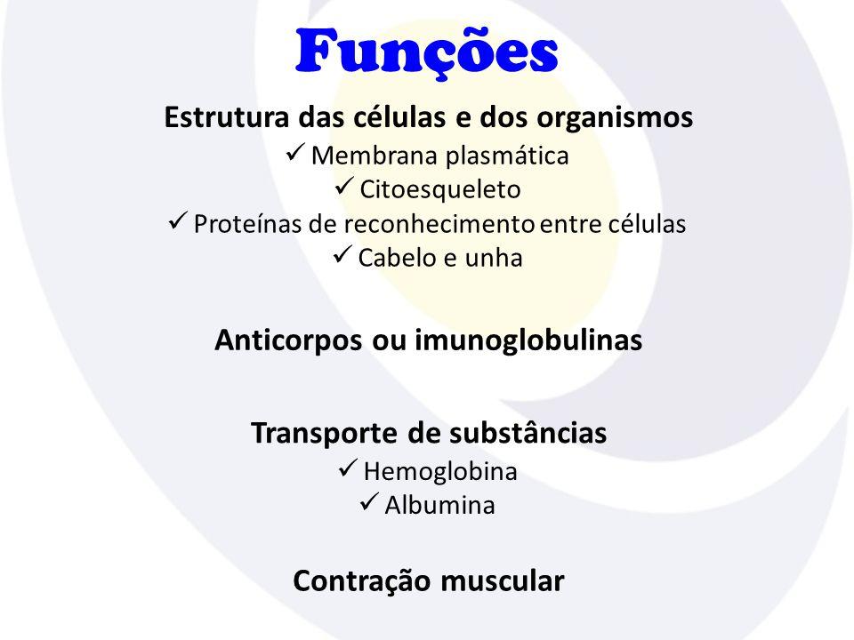 Funções Membrana plasmática Citoesqueleto Proteínas de reconhecimento entre células Cabelo e unha Estrutura das células e dos organismos Anticorpos ou