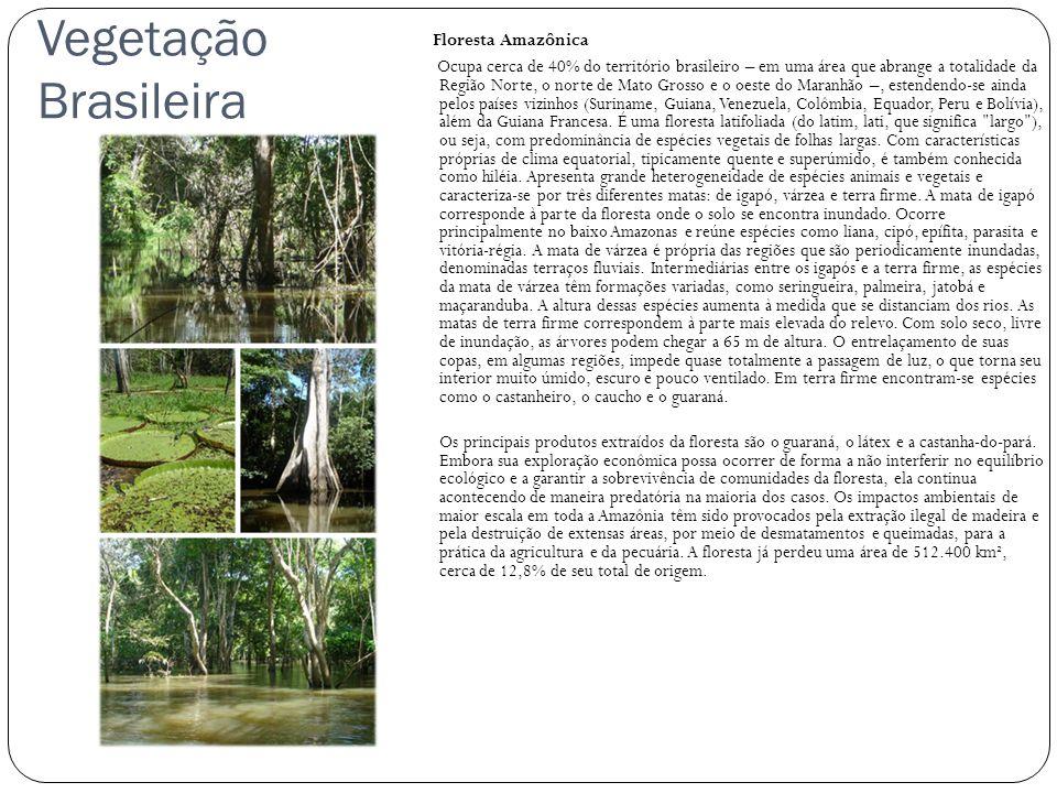 Vegetação Brasileira Floresta Amazônica Ocupa cerca de 40% do território brasileiro – em uma área que abrange a totalidade da Região Norte, o norte de