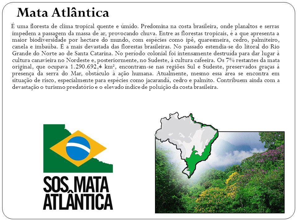 Mata Atlântica É uma floresta de clima tropical quente e úmido. Predomina na costa brasileira, onde planaltos e serras impedem a passagem da massa de