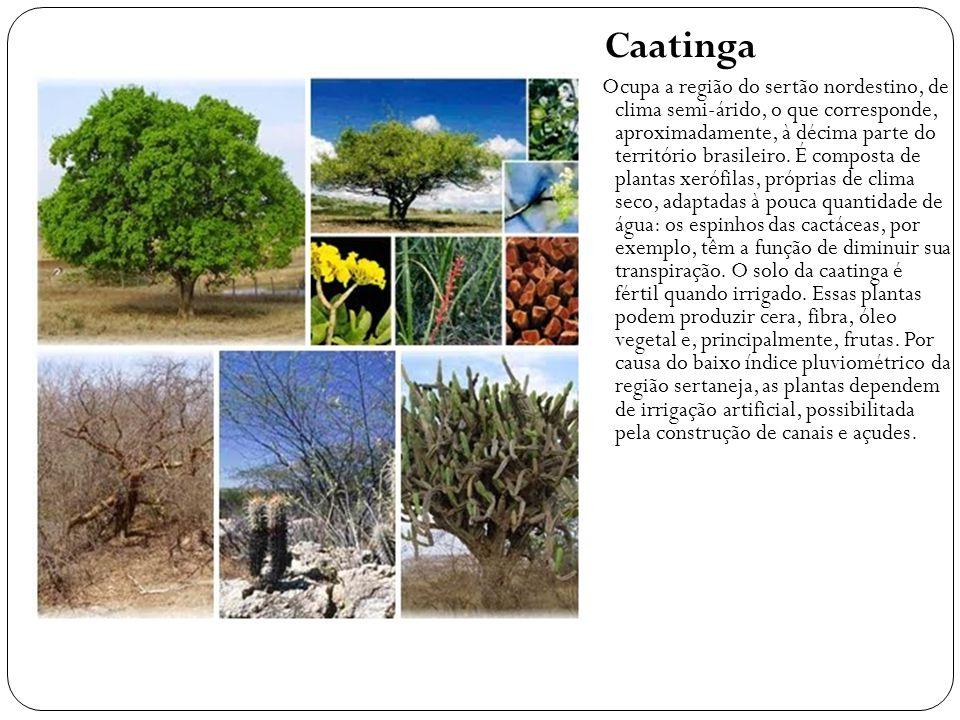 Caatinga Ocupa a região do sertão nordestino, de clima semi-árido, o que corresponde, aproximadamente, à décima parte do território brasileiro. É comp
