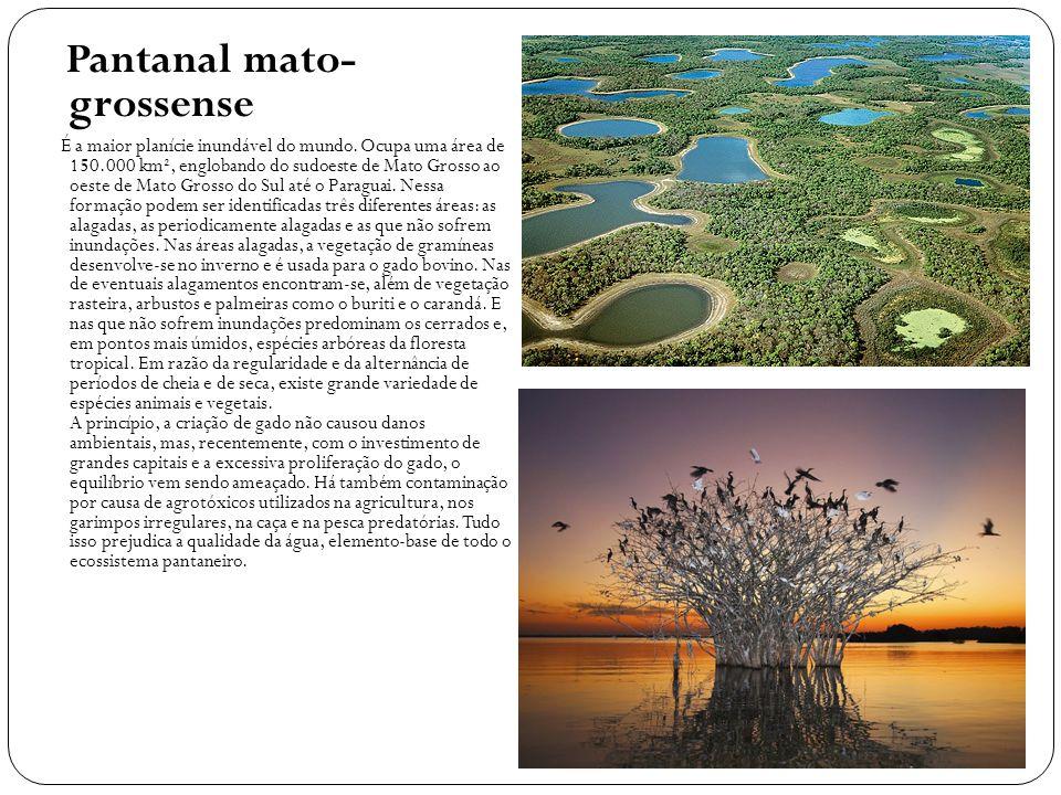 Pantanal mato- grossense É a maior planície inundável do mundo. Ocupa uma área de 150.000 km², englobando do sudoeste de Mato Grosso ao oeste de Mato