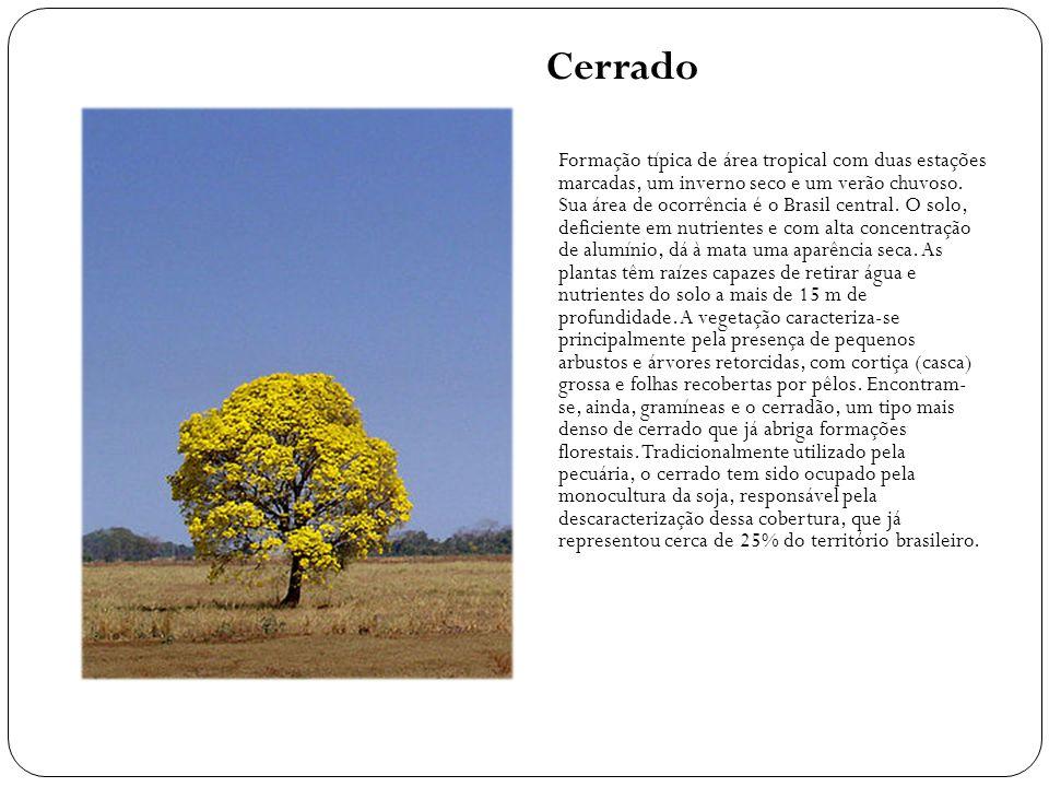 Cerrado Formação típica de área tropical com duas estações marcadas, um inverno seco e um verão chuvoso. Sua área de ocorrência é o Brasil central. O