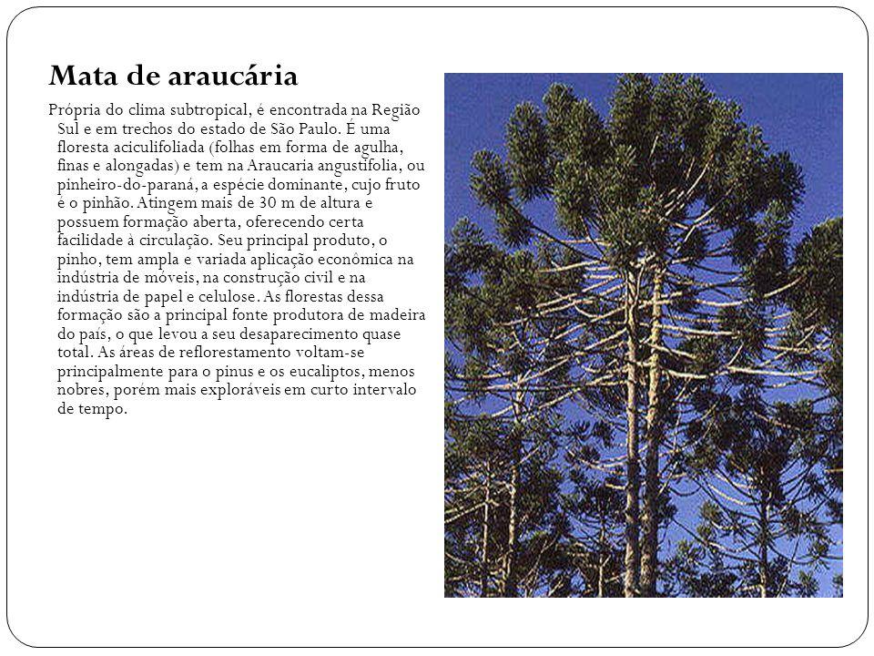 Mata de araucária Própria do clima subtropical, é encontrada na Região Sul e em trechos do estado de São Paulo. É uma floresta aciculifoliada (folhas