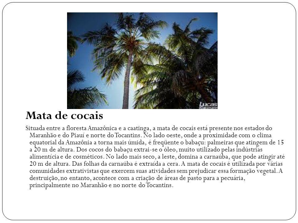 Mata de cocais Situada entre a floresta Amazônica e a caatinga, a mata de cocais está presente nos estados do Maranhão e do Piauí e norte do Tocantins