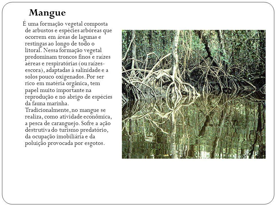 Mangue É uma formação vegetal composta de arbustos e espécies arbóreas que ocorrem em áreas de lagunas e restingas ao longo de todo o litoral. Nessa f