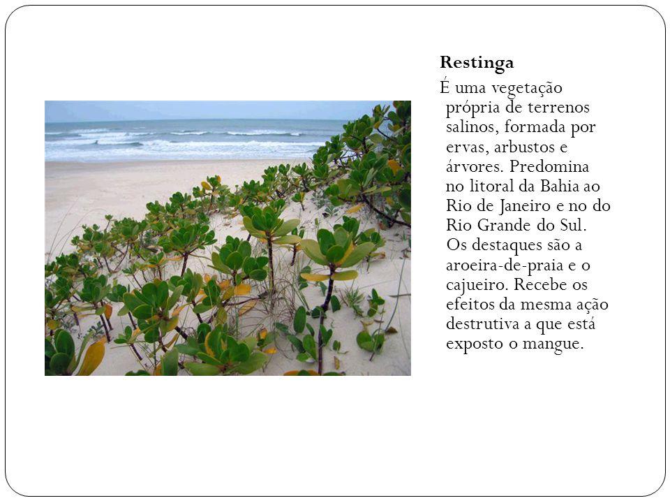 Restinga É uma vegetação própria de terrenos salinos, formada por ervas, arbustos e árvores. Predomina no litoral da Bahia ao Rio de Janeiro e no do R