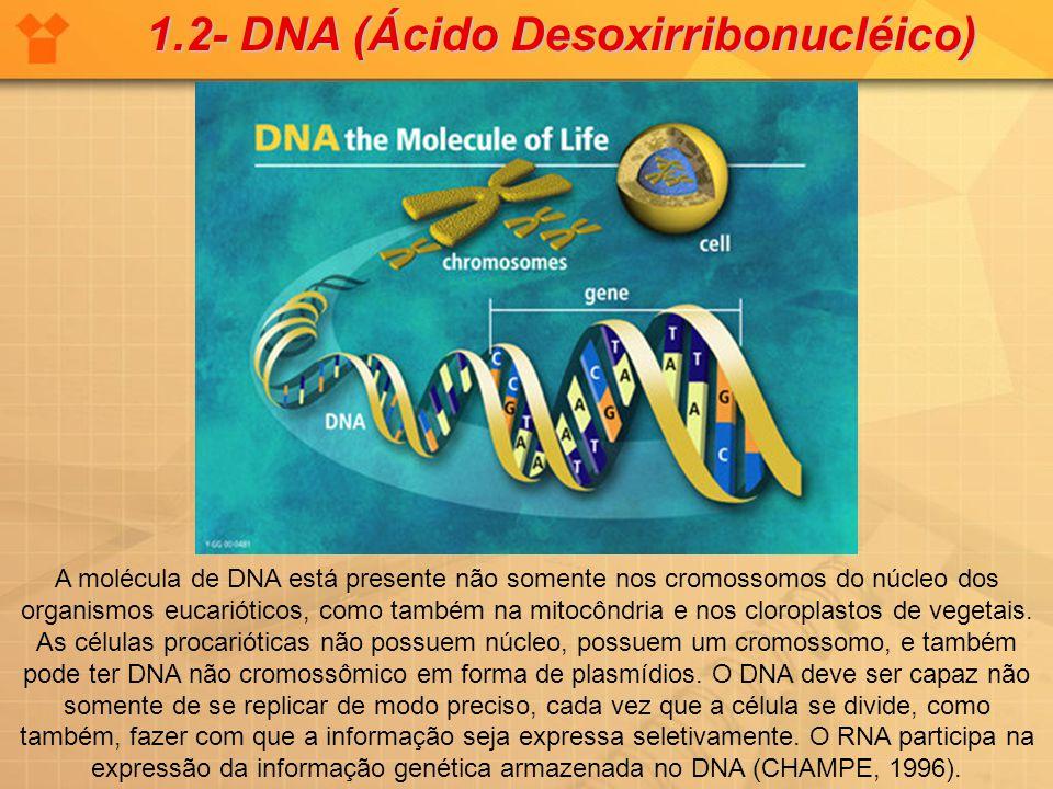 A molécula de DNA está presente não somente nos cromossomos do núcleo dos organismos eucarióticos, como também na mitocôndria e nos cloroplastos de ve