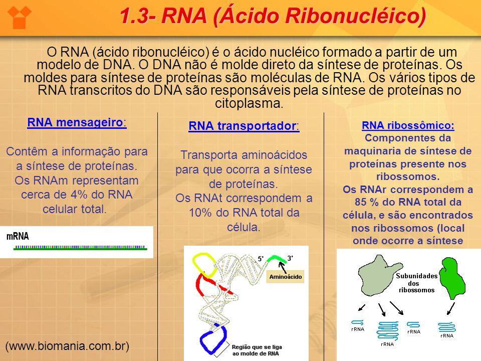 O RNA (ácido ribonucléico) é o ácido nucléico formado a partir de um modelo de DNA. O DNA não é molde direto da síntese de proteínas. Os moldes para s