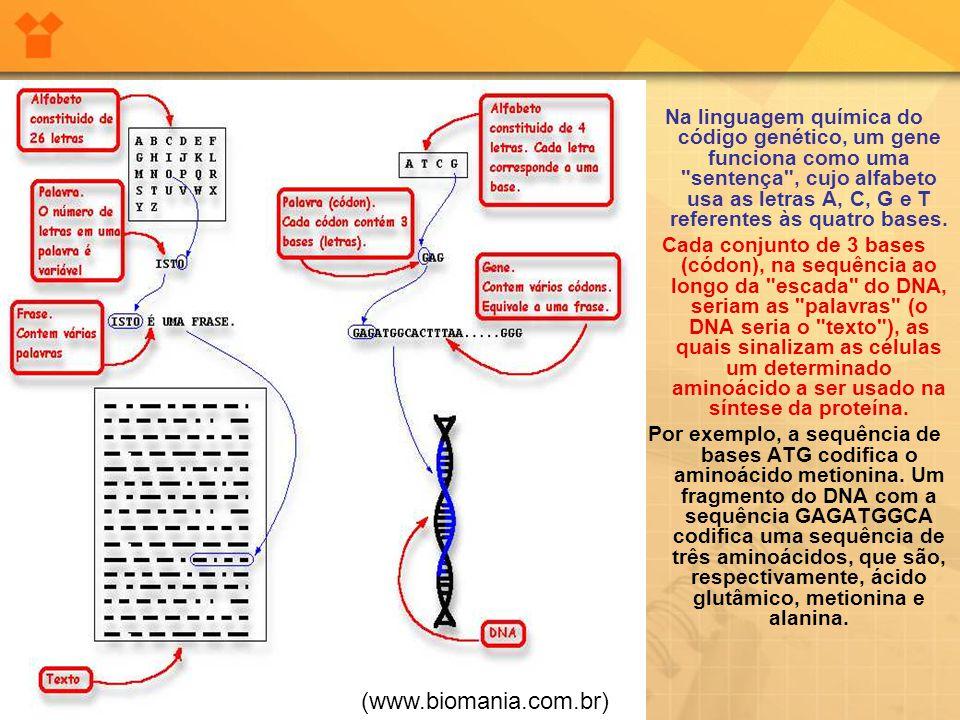 Na linguagem química do código genético, um gene funciona como uma