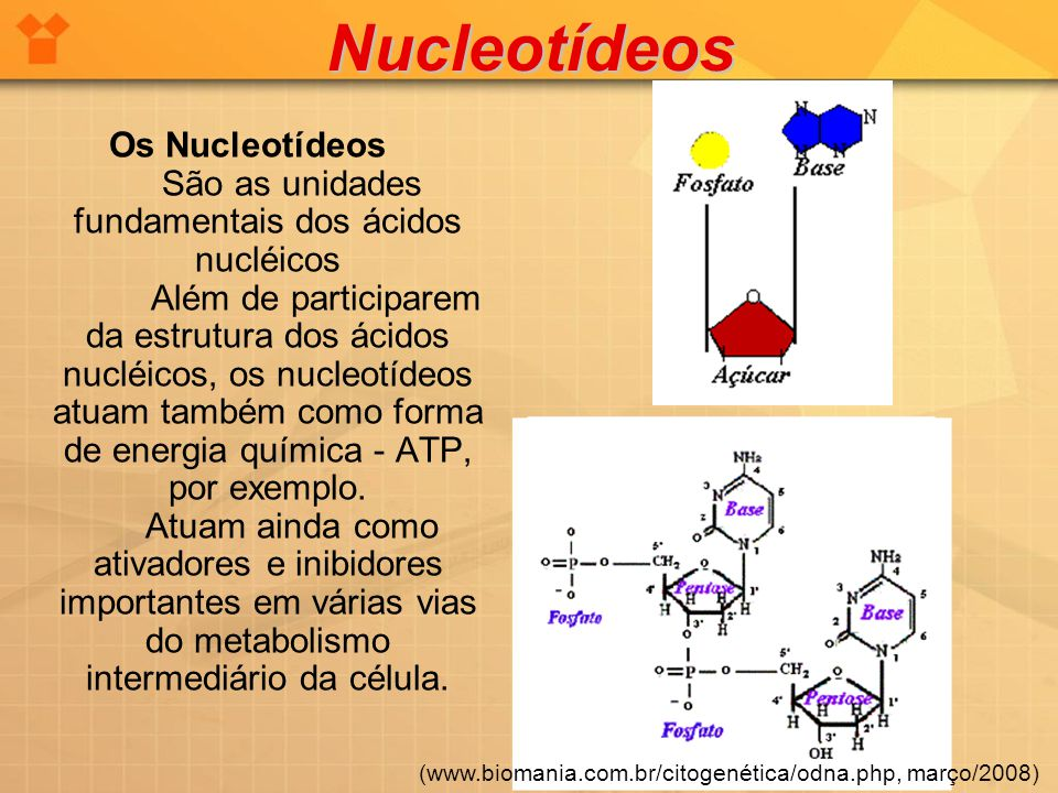 Nucleotídeos Os Nucleotídeos São as unidades fundamentais dos ácidos nucléicos Além de participarem da estrutura dos ácidos nucléicos, os nucleotídeos