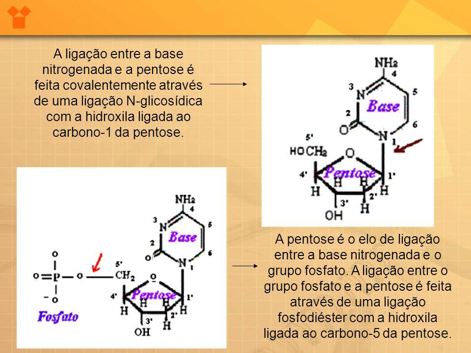 A ligação entre a base nitrogenada e a pentose é feita covalentemente através de uma ligação N-glicosídica com a hidroxila ligada ao carbono-1 da pent