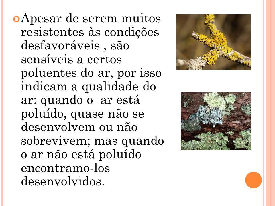 Existem vários tipos de líquenes: Líquenes Crostosos ou Crustáceo; Líquenes Crostoso Esquamuloso; Líquenes Crostoso Leproso; Líquenes Foliosos ou Foliáceos; Líquenes Fruticosos ou Fruticulosos; Líquenes Gelatinosos; Líquenes Dimórficos.