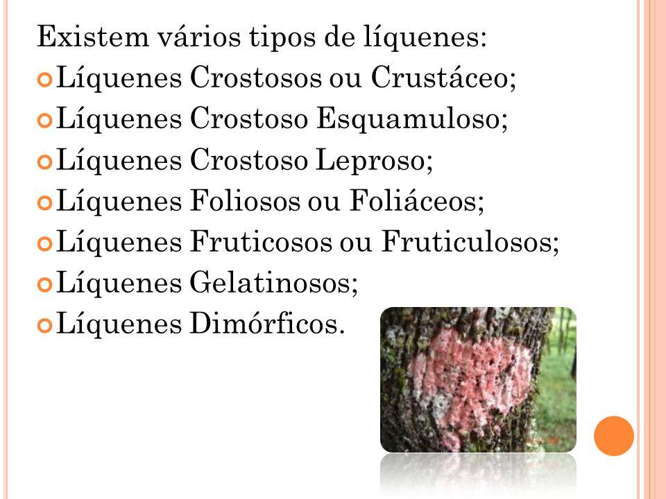 Existem vários tipos de líquenes: Líquenes Crostosos ou Crustáceo; Líquenes Crostoso Esquamuloso; Líquenes Crostoso Leproso; Líquenes Foliosos ou Foli