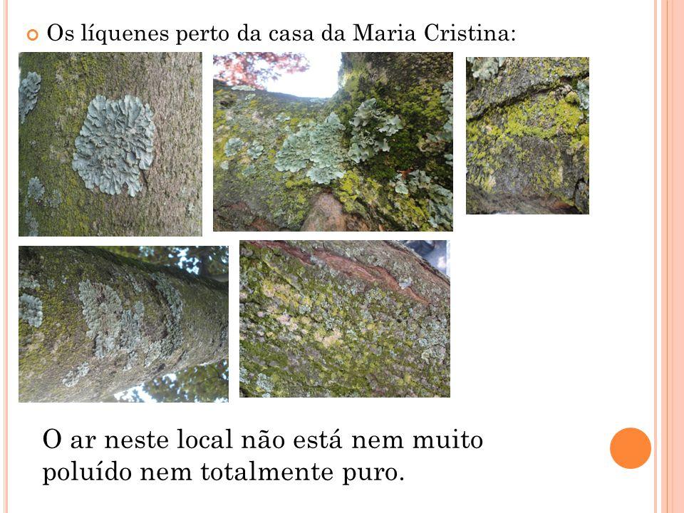 Os líquenes perto da casa da Maria Cristina: O ar neste local não está nem muito poluído nem totalmente puro.