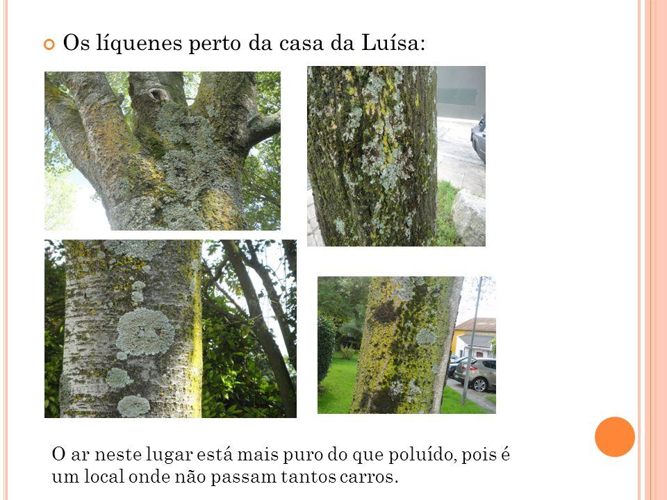 Os líquenes perto da casa da Luísa: O ar neste lugar está mais puro do que poluído, pois é um local onde não passam tantos carros.
