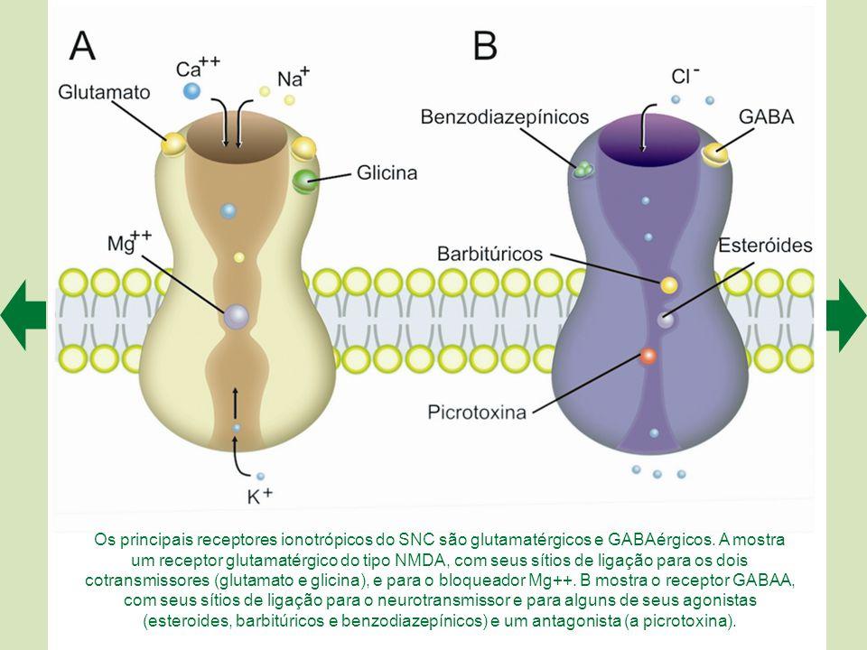 Os principais receptores ionotrópicos do SNC são glutamatérgicos e GABAérgicos.