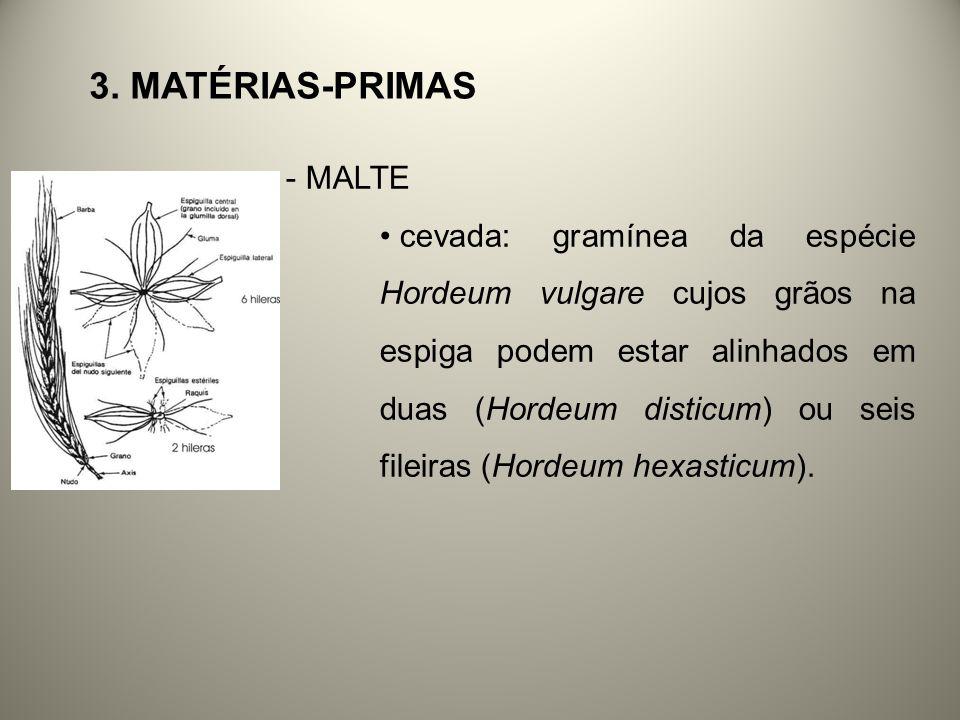 3. MATÉRIAS-PRIMAS - MALTE cevada: gramínea da espécie Hordeum vulgare cujos grãos na espiga podem estar alinhados em duas (Hordeum disticum) ou seis