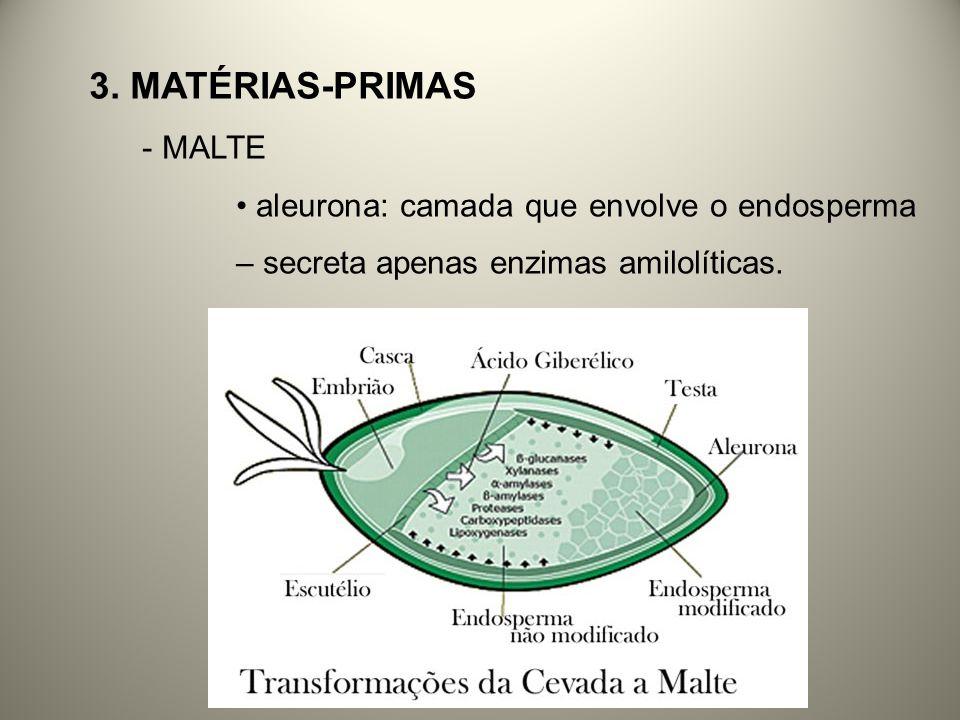 - MALTE aleurona: camada que envolve o endosperma – secreta apenas enzimas amilolíticas.