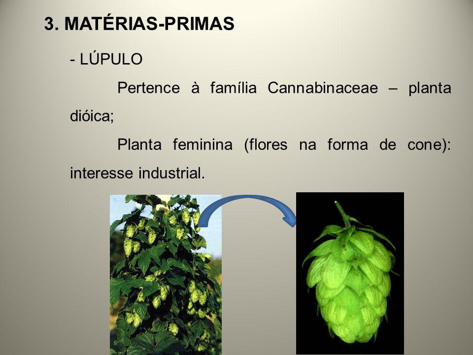 3. MATÉRIAS-PRIMAS - LÚPULO Pertence à família Cannabinaceae – planta dióica; Planta feminina (flores na forma de cone): interesse industrial.
