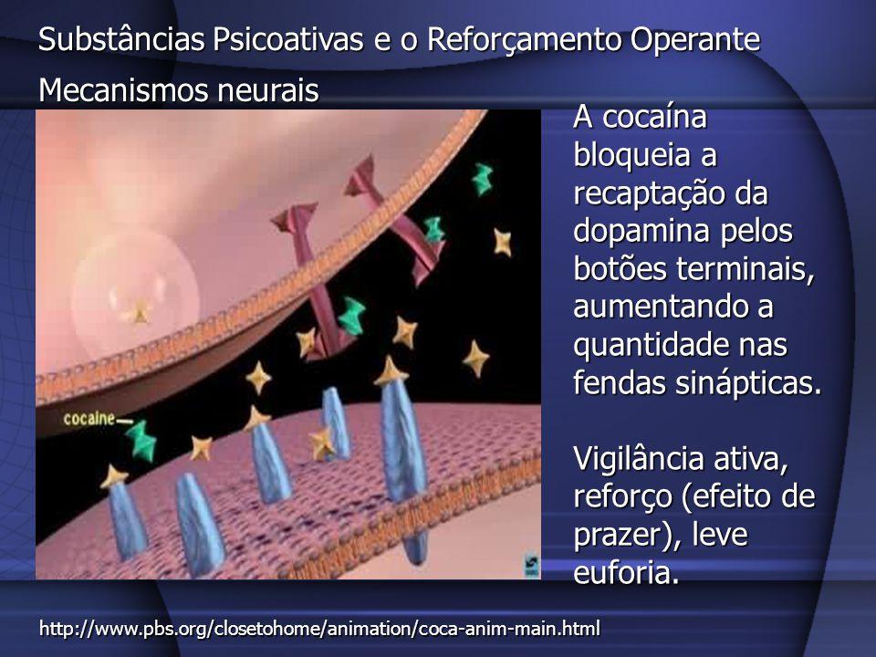 Substâncias Psicoativas e o Reforçamento Operante Mecanismos neurais A cocaína bloqueia a recaptação da dopamina pelos botões terminais, aumentando a