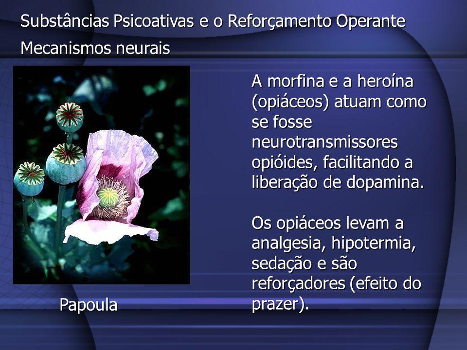 Substâncias Psicoativas e o Reforçamento Operante Mecanismos neurais A morfina e a heroína (opiáceos) atuam como se fosse neurotransmissores opióides,