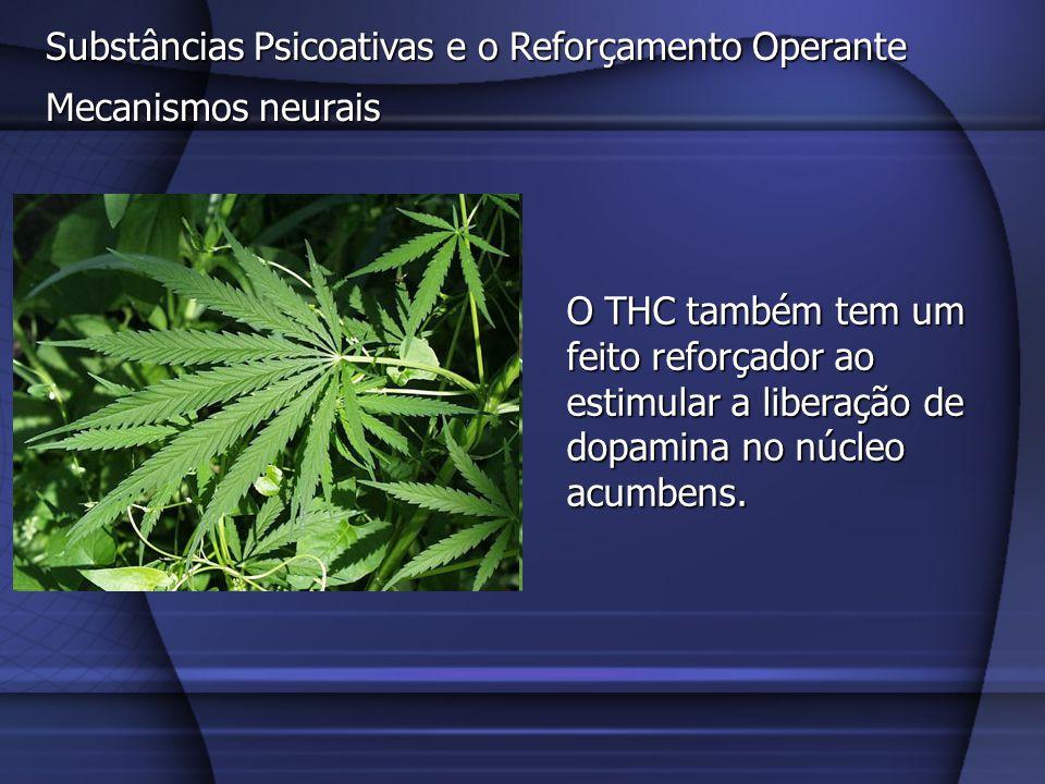 Substâncias Psicoativas e o Reforçamento Operante Mecanismos neurais O THC também tem um feito reforçador ao estimular a liberação de dopamina no núcl
