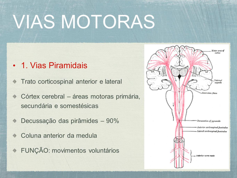 VIAS MOTORAS 1. Vias Piramidais Trato corticospinal anterior e lateral Córtex cerebral – áreas motoras primária, secundária e somestésicas Decussação