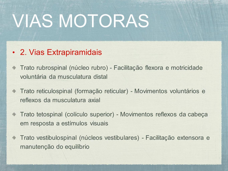 VIAS MOTORAS 2. Vias Extrapiramidais Trato rubrospinal (núcleo rubro) - Facilitação flexora e motricidade voluntária da musculatura distal Trato retic