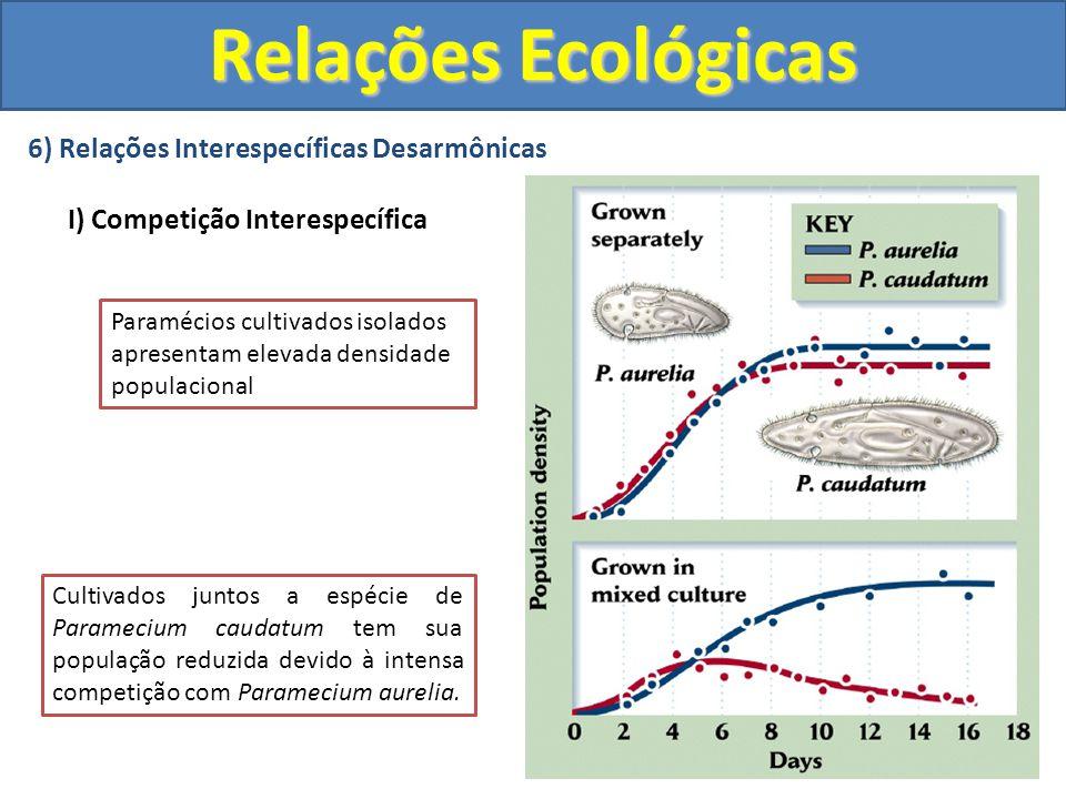 6) Relações Interespecíficas Desarmônicas I) Competição Interespecífica Relações Ecológicas Paramécios cultivados isolados apresentam elevada densidad