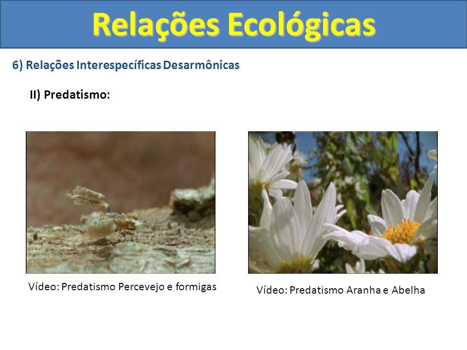 6) Relações Interespecíficas Desarmônicas II) Predatismo: Relações Ecológicas Vídeo: Predatismo Percevejo e formigas Vídeo: Predatismo Aranha e Abelha