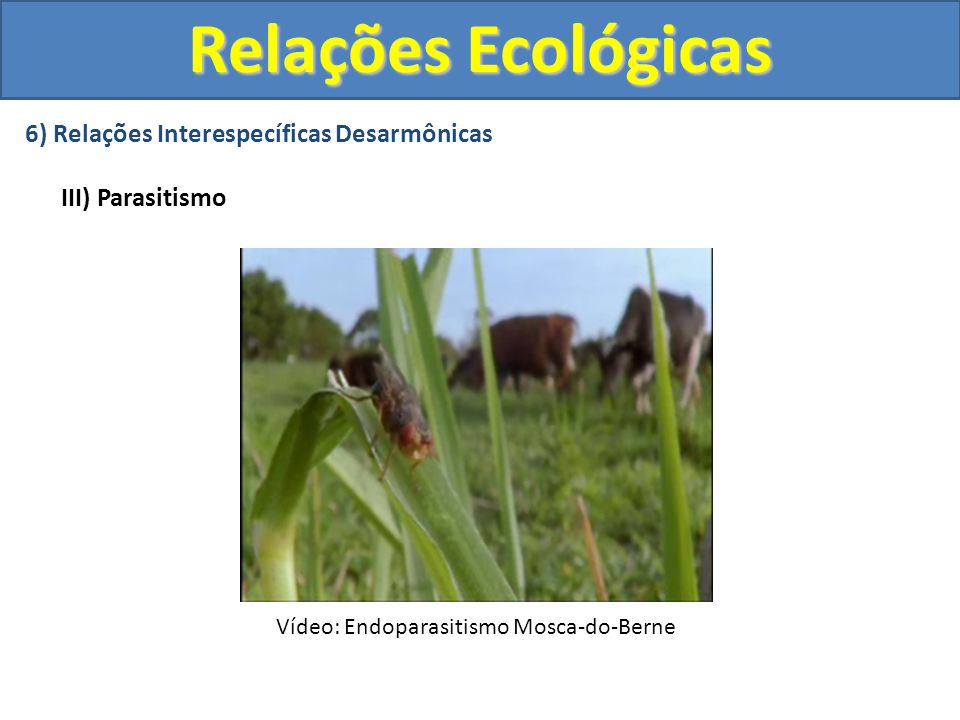 6) Relações Interespecíficas Desarmônicas III) Parasitismo Relações Ecológicas Vídeo: Endoparasitismo Mosca-do-Berne
