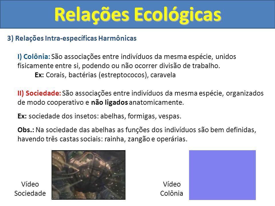3) Relações Intra-específicas Harmônicas I) Colônia: São associações entre indivíduos da mesma espécie, unidos fisicamente entre si, podendo ou não oc