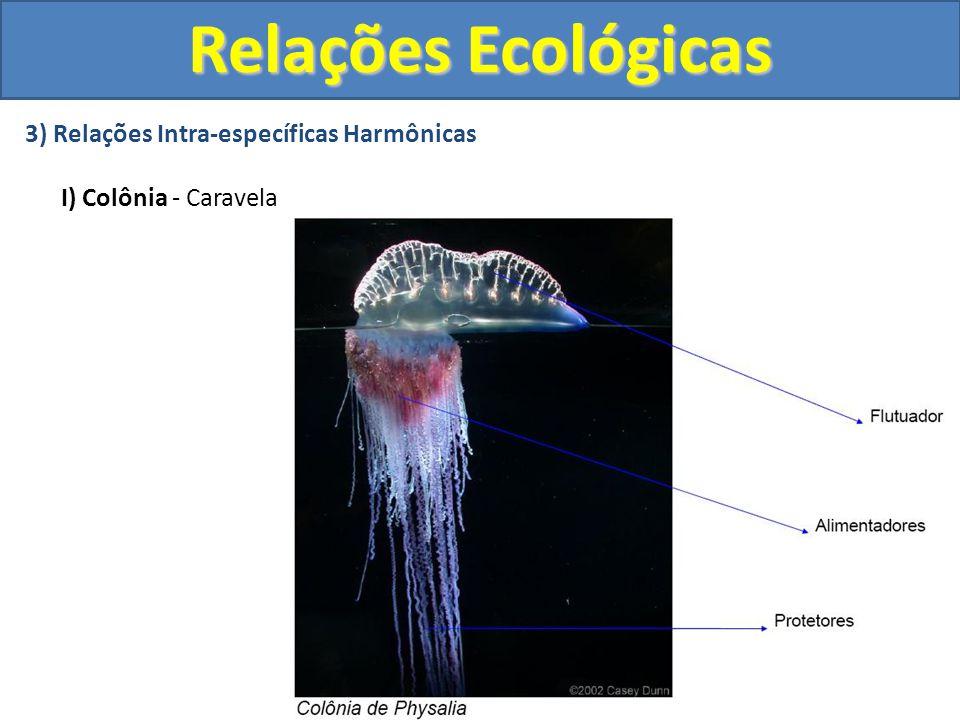 3) Relações Intra-específicas Harmônicas II) Sociedade: Abelhas Relações Ecológicas