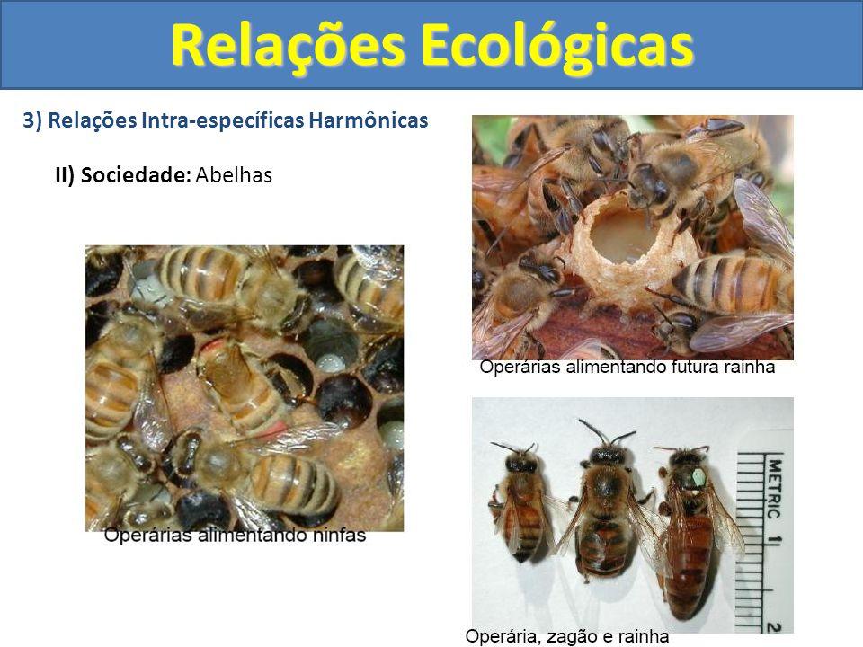 4) Relações Interespecíficas Harmônicas I) Mutualismo: É a associação entre indivíduos de espécies diferentes, necessária à sobrevivência dos participantes e que beneficia ambos.