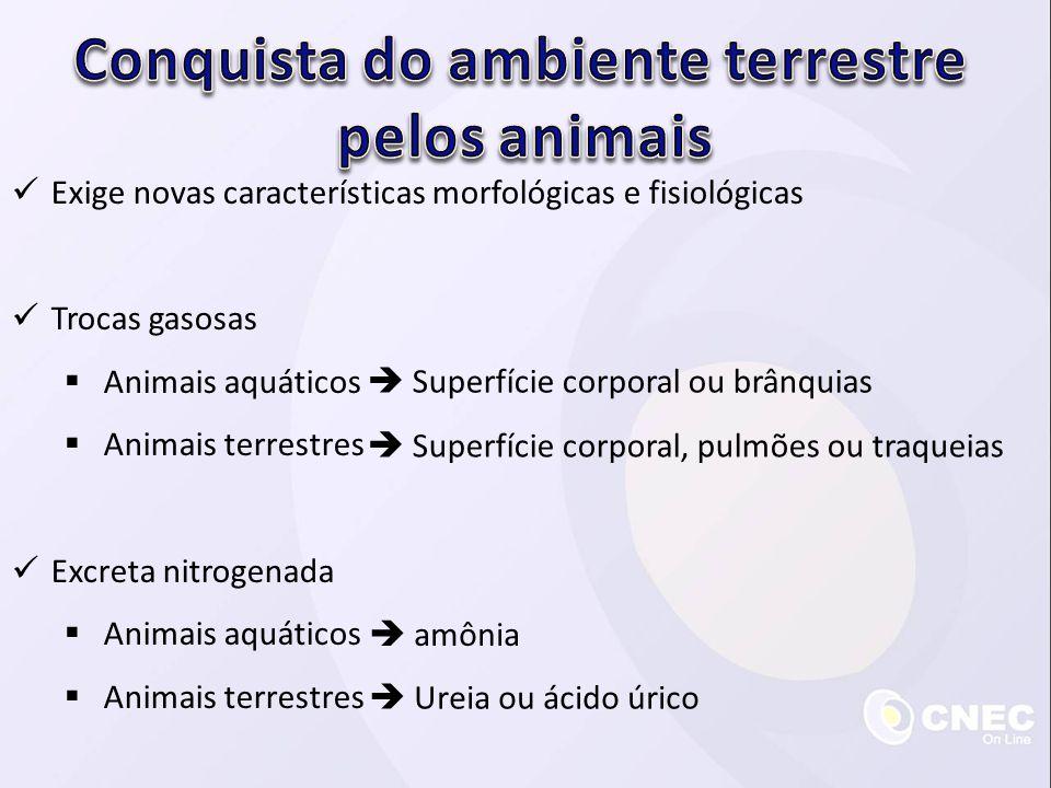 Exige novas características morfológicas e fisiológicas Trocas gasosas Animais aquáticos Animais terrestres Excreta nitrogenada Animais aquáticos Anim