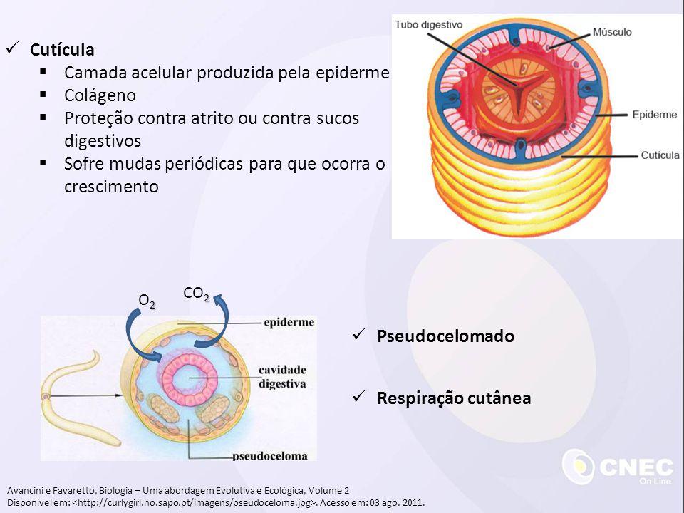 Avancini e Favaretto, Biologia – Uma abordagem Evolutiva e Ecológica, Volume 2 Disponível em:. Acesso em: 03 ago. 2011. Respiração cutânea 2O22O2 2 CO