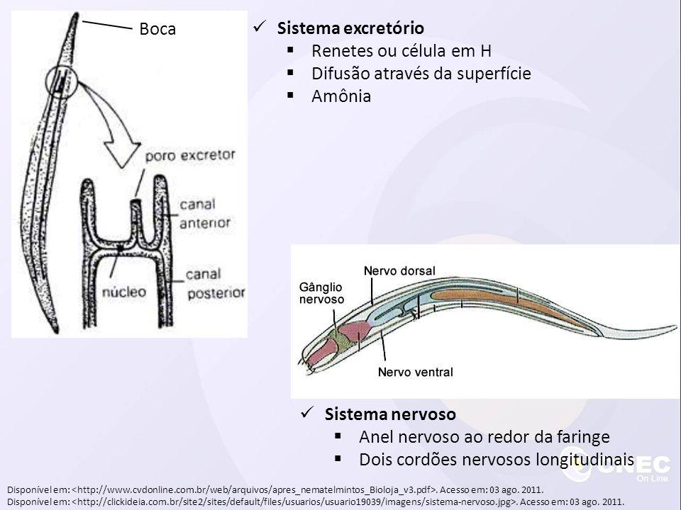 Disponível em:. Acesso em: 03 ago. 2011. Sistema excretório Renetes ou célula em H Difusão através da superfície Amônia Boca Sistema nervoso Anel nerv