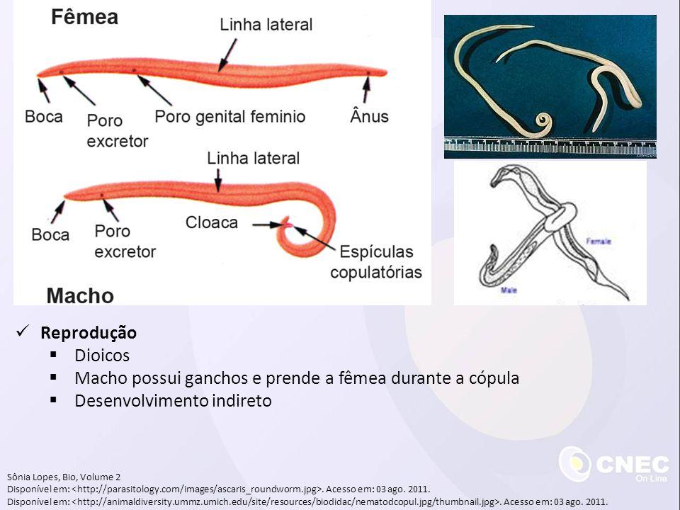 Sônia Lopes, Bio, Volume 2 Disponível em:. Acesso em: 03 ago. 2011. Reprodução Dioicos Macho possui ganchos e prende a fêmea durante a cópula Desenvol