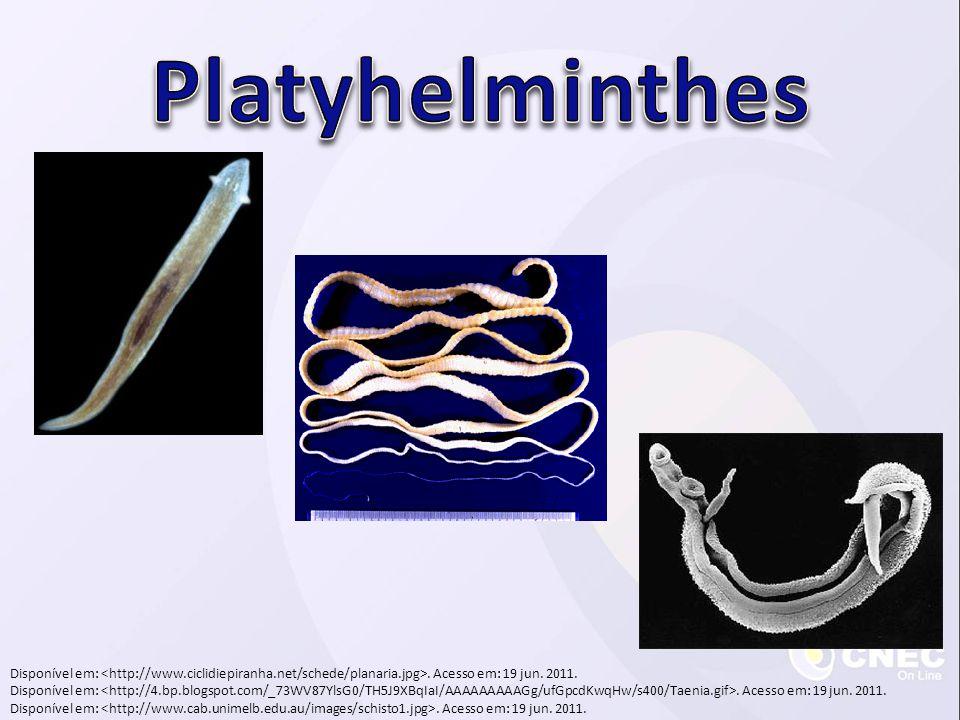 Platy = chato Hemins = verme