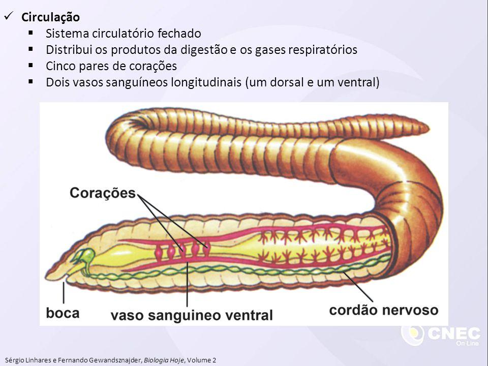 Sérgio Linhares e Fernando Gewandsznajder, Biologia Hoje, Volume 2 Circulação Sistema circulatório fechado Distribui os produtos da digestão e os gase
