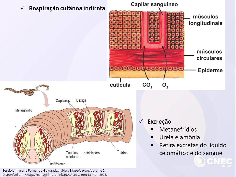 Sérgio Linhares e Fernando Gewandsznajder, Biologia Hoje, Volume 2 Disponível em:. Acesso em: 13 mar. 2008. Respiração cutânea indireta Excreção Metan