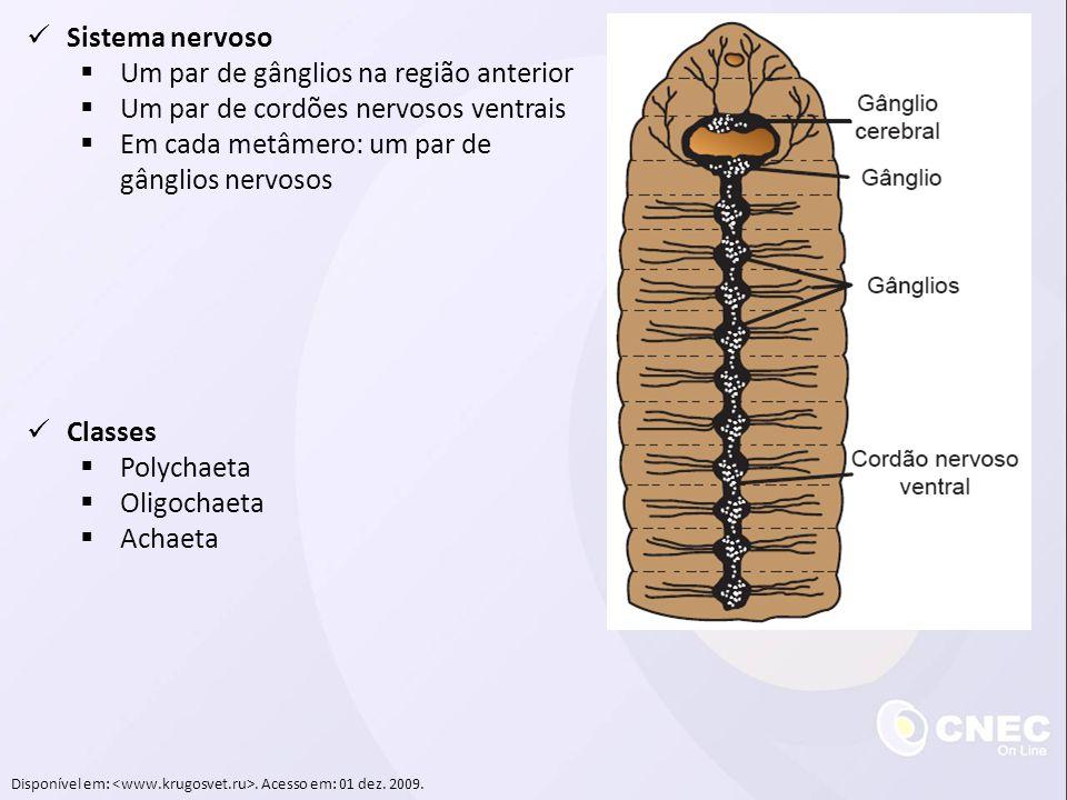 Disponível em:. Acesso em: 01 dez. 2009. Sistema nervoso Um par de gânglios na região anterior Um par de cordões nervosos ventrais Em cada metâmero: u