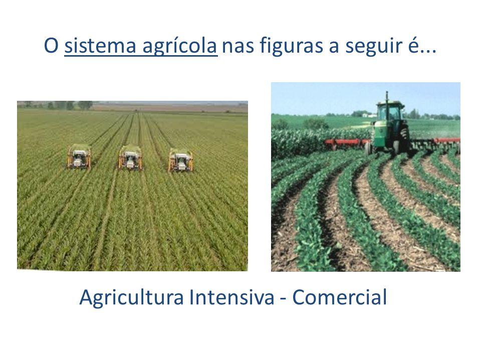 O sistema agrícola nas figuras a seguir é... Agricultura Intensiva - Comercial