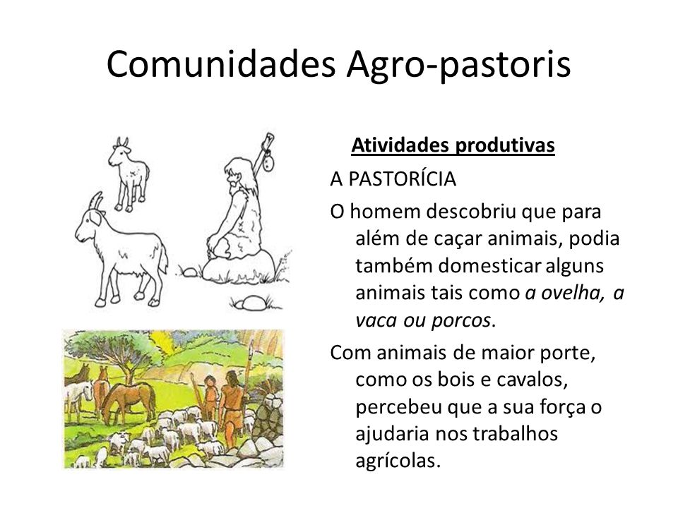 Comunidades Agro-pastoris Atividades produtivas A PASTORÍCIA O homem descobriu que para além de caçar animais, podia também domesticar alguns animais