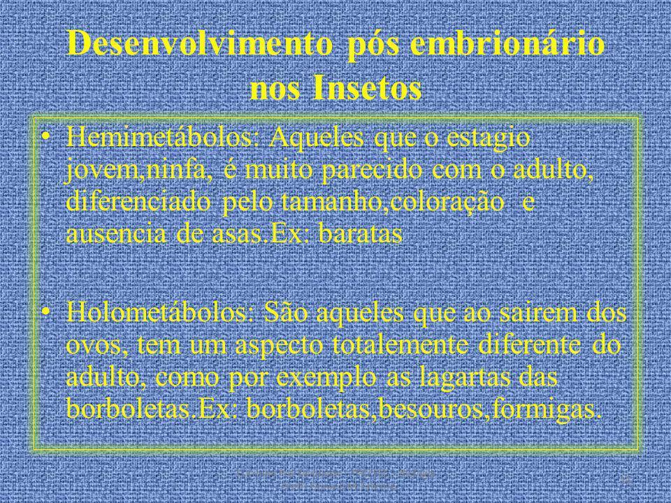 Desenvolvimento pós embrionário nos Insetos Hemimetábolos: Aqueles que o estagio jovem,ninfa, é muito parecido com o adulto, diferenciado pelo tamanho