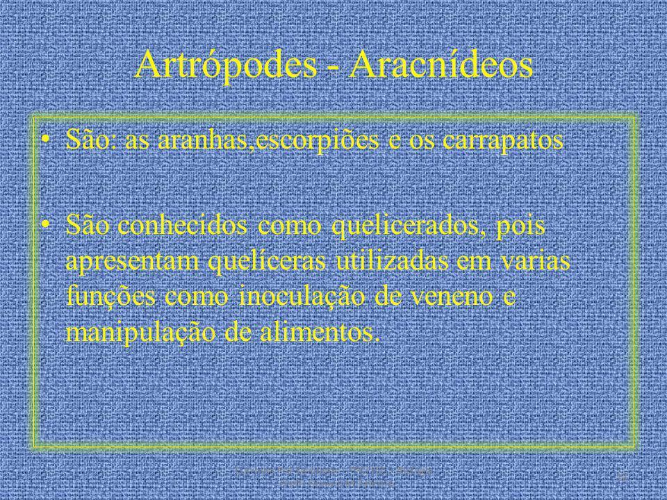 Artrópodes - Aracnídeos São: as aranhas,escorpiões e os carrapatos São conhecidos como quelicerados, pois apresentam quelíceras utilizadas em varias f