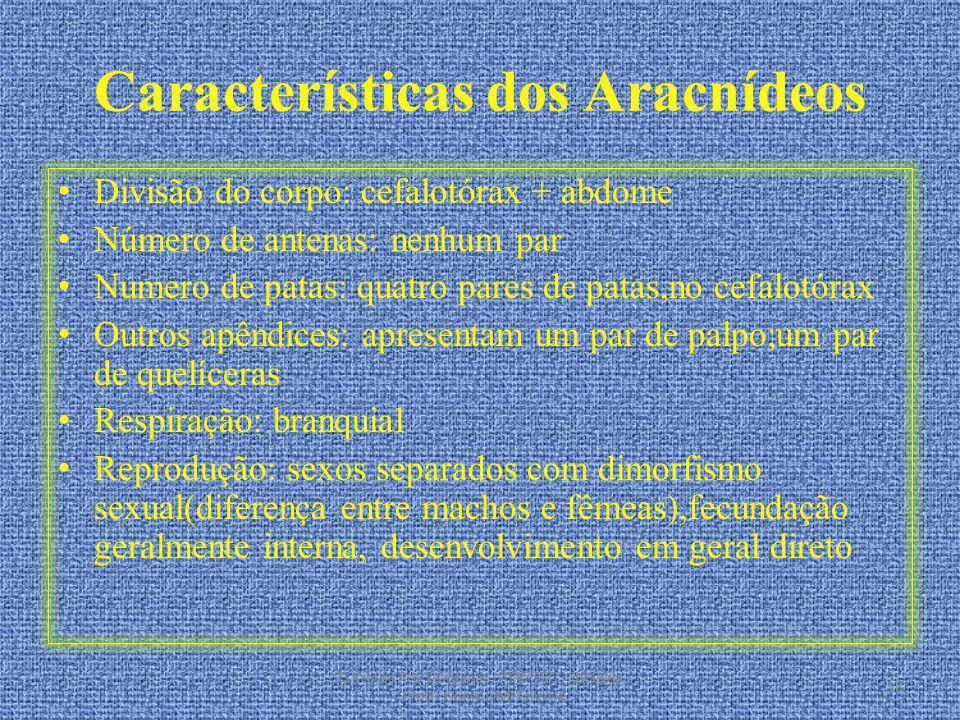 Características dos Aracnídeos Divisão do corpo: cefalotórax + abdome Número de antenas: nenhum par Numero de patas: quatro pares de patas,no cefalotó