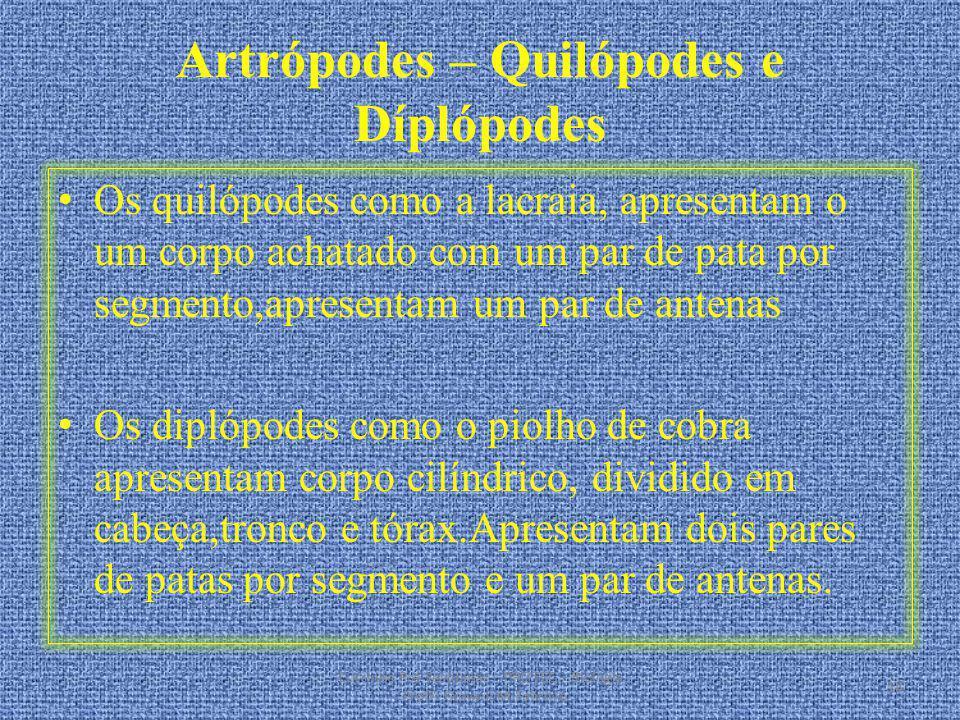 Artrópodes – Quilópodes e Díplópodes Os quilópodes como a lacraia, apresentam o um corpo achatado com um par de pata por segmento,apresentam um par de