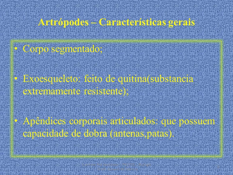 Artrópodes – Características gerais Corpo segmentado; Exoesqueleto: feito de quitina(substancia extremamente resistente); Apêndices corporais articula