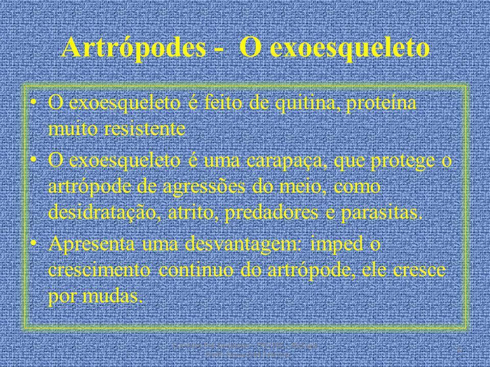 Artrópodes - O exoesqueleto O exoesqueleto é feito de quitina, proteína muito resistente O exoesqueleto é uma carapaça, que protege o artrópode de agr